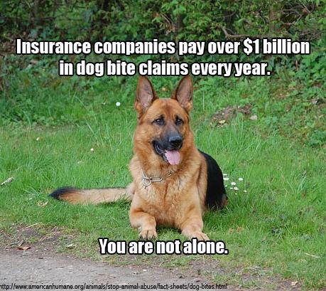 dog bit statistics